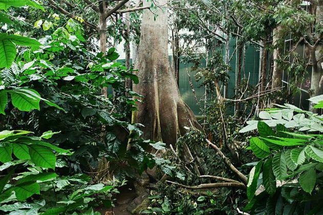 Las regiones con mayor biodiversidad son las más vulnerables al cambio climático