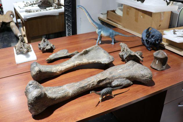 """Chile descubre el """"Arackar licanantay"""", un dinosaurio del desierto de Atacama"""