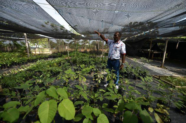 El proyecto de los exFarc que busca conservar el bosque seco tropical en Cesar