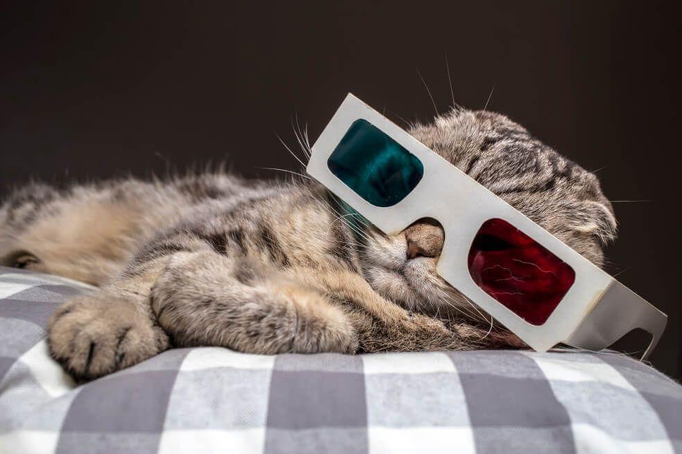 Pura carreta: los gatos no son tan independientes como dicen por ahí