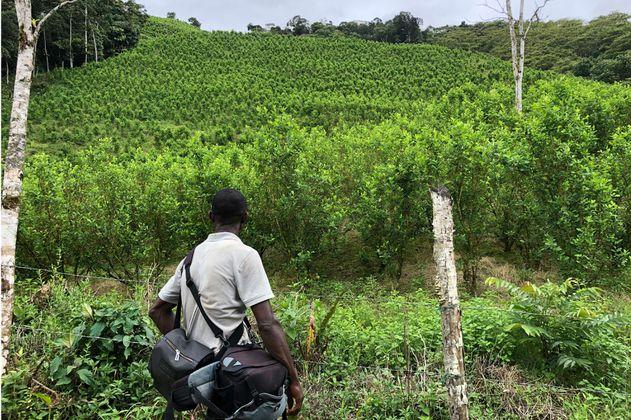 Formalizar la tierra no reduce siembra de cultivos de coca, según académicos