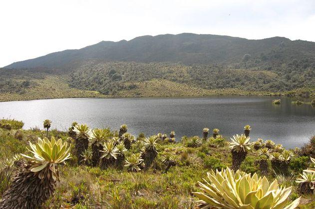 La gestión territorial que está luchando para conservar la biodiversidad de Colombia