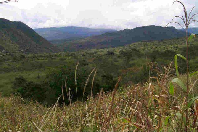 Fiscalía ocupó 18 mil hectáreas de Farc en Caquetá