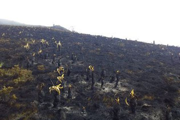 Incendio forestal que empezó hace tres días afecta al páramo de Santurbán