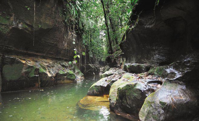 La Fundación Afrocaq, el Observatorio Ambiental y de Paz de Caquetá y la ONG Amazona presentaron tres tutelas para salvar los ríos más importantes de ese departamento: el Caguán, el Pescado y el Caquetá.