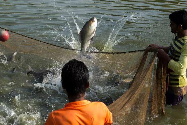 Estudio revela cómo ha cambiado la acuicultura en los últimos 20 años