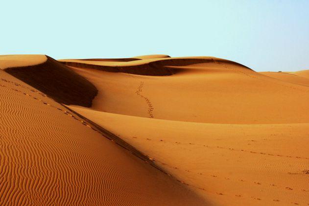 El tratamiento que convierte la arena del desierto en tierra fértil