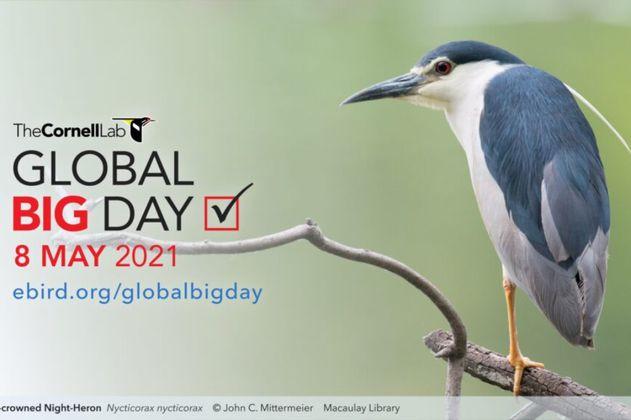 Algunos pajareros no participarán en el Global Big Day como apoyo a la protesta