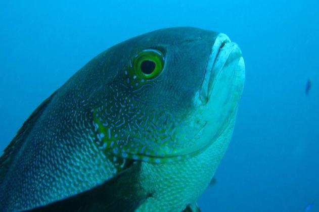 Olas de calor marinas provocan cambios moleculares en los peces