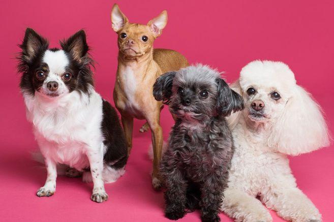 Día mundial del perro: 9 consejos para cuidar al mejor amigo del ser humano