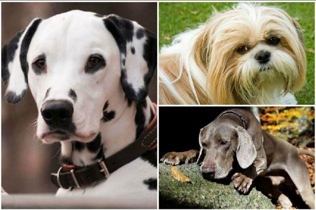 ¿Cuál es la raza de perro más inteligente?