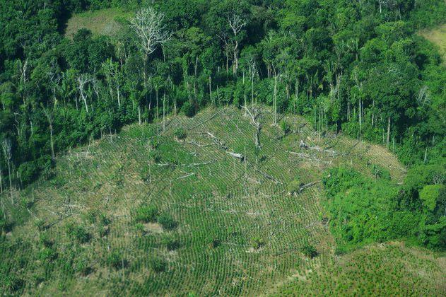 Por la tala y el uso del suelo, los bosques tropicales ahora capturan menos CO2