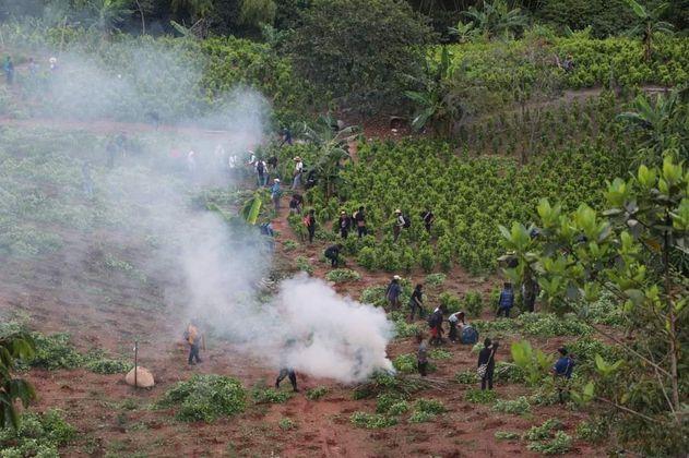 Las tensiones entre indígenas del Cauca y cocaleros por la minga hacia adentro