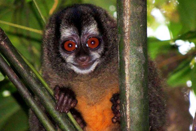 La deforestación ha reducido el hábitat de los monos en Colombia, según el primer atlas de primates