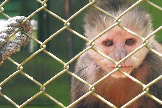 Curar las heridas que dejó el tráfico de fauna