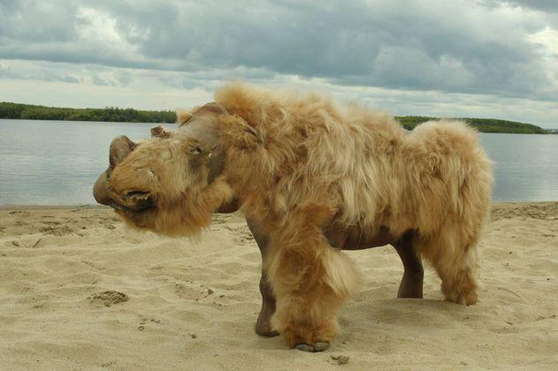 Los rinocerontes lanudos no se extinguieron por la caza, sino por el cambio climático