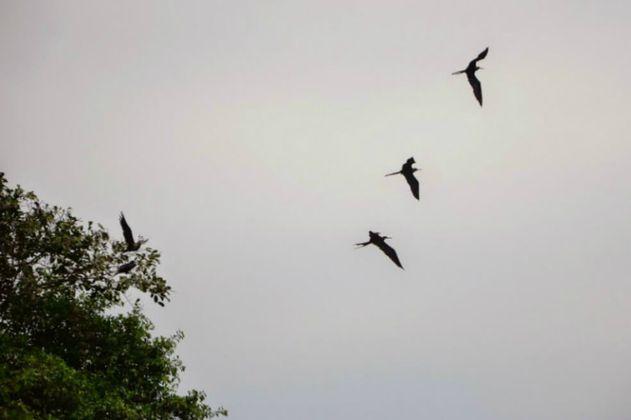 La crisis climática ponen en riesgo a las aves migratorias