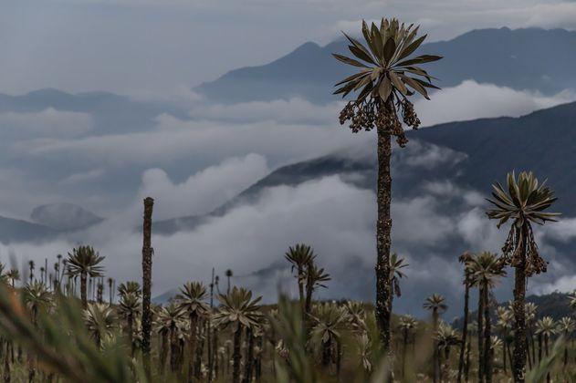 Parque Chingaza entra en la lista de áreas protegidas de la UICN