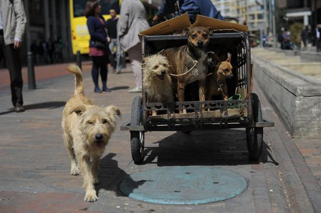 Ciudadanos podrán ofrecer hogar de paso para animales maltratados en Bogotá