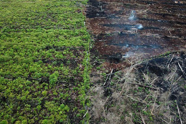 Alerta global: deforestaron 43 millones hectáreas de bosque en la última década