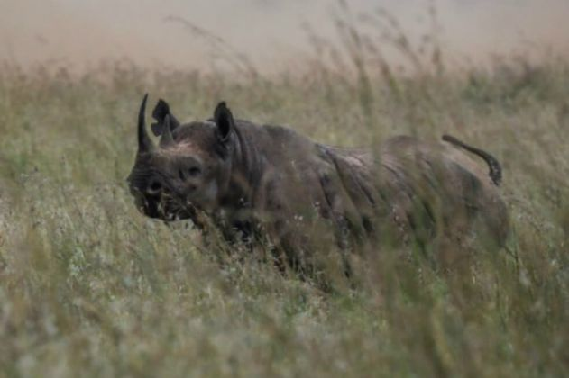 """Kenia alerta de la """"muerte"""" del lago Nakuru, famoso por sus rinocerontes y sus flamencos rosados"""