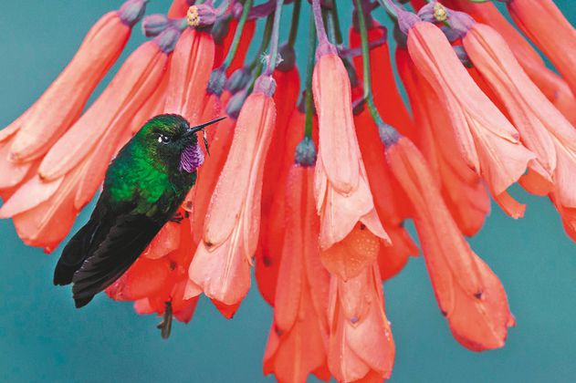 A las aves en Colombia se les agota el tiempo si no se frena la deforestación