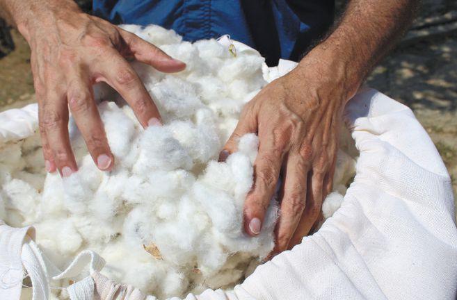 La primera cosecha de algodón orgánico con éxito comercial se logró en Ciénaga, Magdalena, en un centro de investigación de Prosierra. / Fotos: Cortesía FAO.