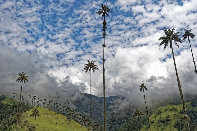 Becas Colombia Biodiversa: convocatoria abre el 26 de julio