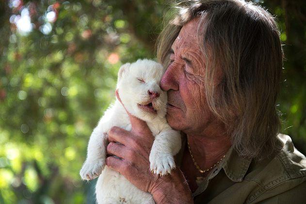 La conmovedora historia de Whithe King, el cachorro de león blanco que fue rechazado por su madre