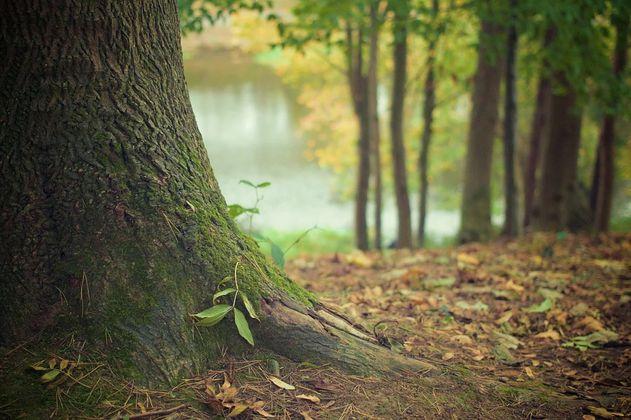 ¿Por qué no se deben recoger las hojas de los árboles que caen  al piso?