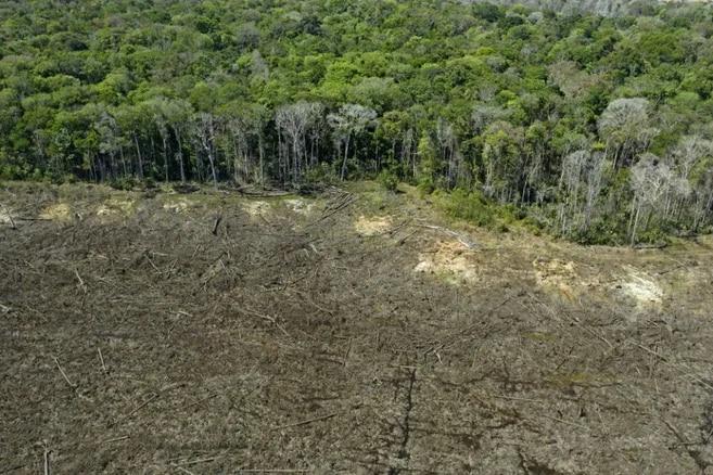 El informe advierte un incremento del 82.8% de deforestación en la Amazonia solo entre enero y marzo de 2020.