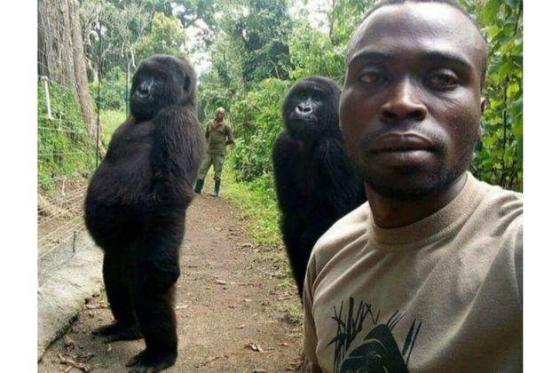Guardabosques se toman selfie con gorilas como símbolo contra la caza furtiva