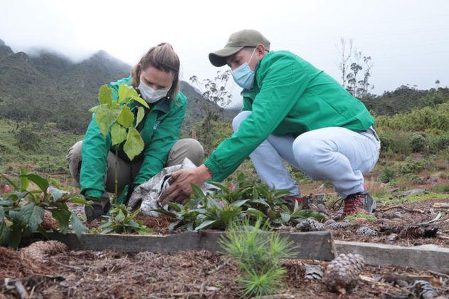 Bogotá plantó 1.200 árboles para recuperar los Cerros Orientales