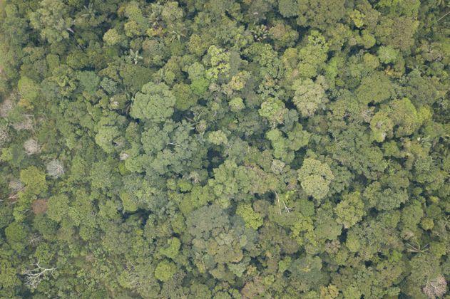 Desde el 1 de marzo el Banco Agrario no financiará proyectos en zonas protegidas