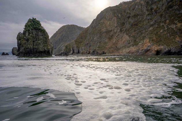 Desastre ambiental en Rusia deja cientos de moluscos muertos