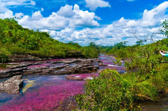 Caño Cristales, Meta. / Getty Images.