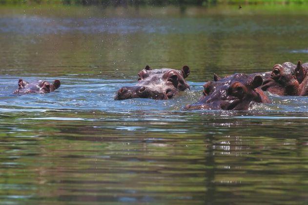 Hipopótamos en la sala: ¿qué más se necesita para actuar?